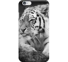 Tiger sticking its tongue out  iPhone Case/Skin