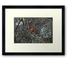Pretty in Red. Framed Print