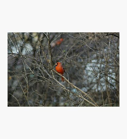 Pretty in Red. Photographic Print
