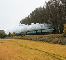 Tangmere at Whiteball  by Rob Hawkins