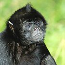 Columbian Spider Monkey by Stevie Mancini