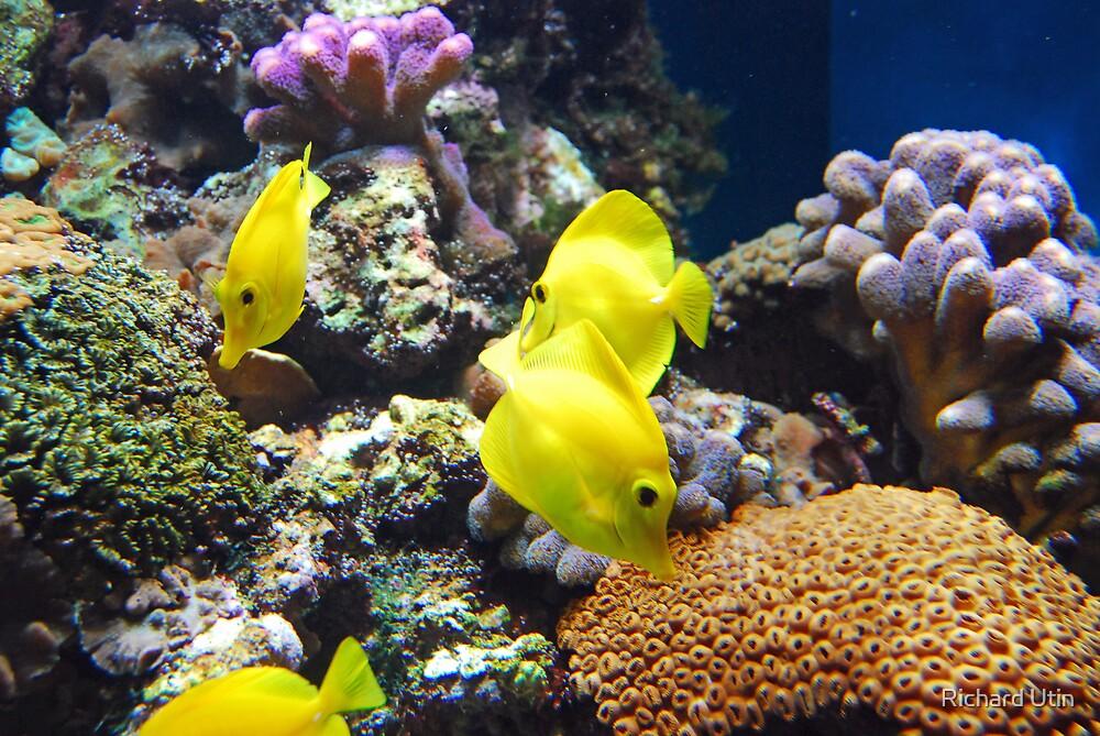 Yellow Submarines by Richard Utin