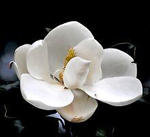 Ballerina Blossom  by Jean Scheer