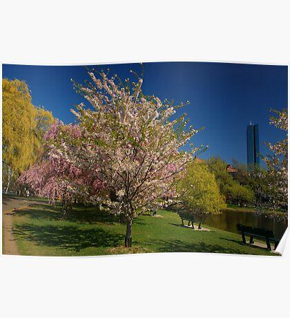 Charles River Esplanade in Bloom Poster