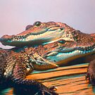 Gator Babies by Tom Miles