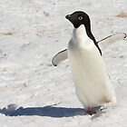 Adelie Penguin  ~  &quot;The Dancer&quot; by Robert Elliott