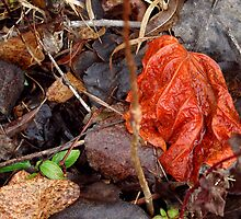 Red Leaf by giselle