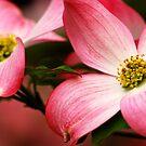 Two Flowers by Gabriel Martinez