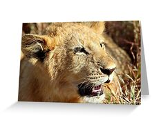 Closeup Lion Cub, Maasai Mara, Kenya  Greeting Card