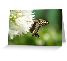 butterfly, flower photography Greeting Card