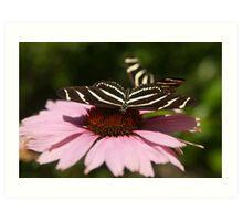 Zebra Longwing butterfly photography Art Print