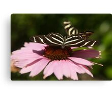 Zebra Longwing butterfly photography Canvas Print