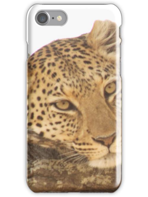 Fed Leopard by fitch