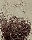 NEST by Thomas Barker-Detwiler