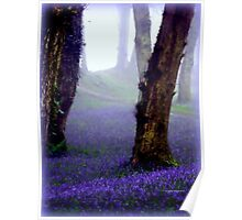 Bluebells in the Mist Poster