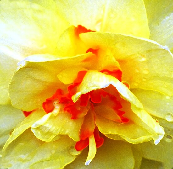 Yellow Ruffles by Kathleen Struckle