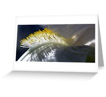 Soft Brush Greeting Card