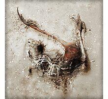Dead Roo Photographic Print