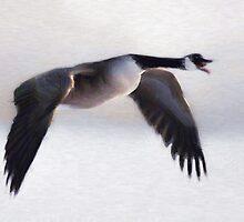 Canada Goose in Winter Flight (Card) by Gracey