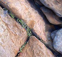 In the cracks I of III by Bruce Eitzen