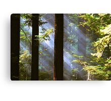 Shining Through the Giants Canvas Print