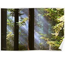 Shining Through the Giants Poster