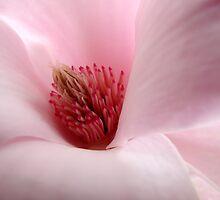 Pink Magnolia by Luis Correia