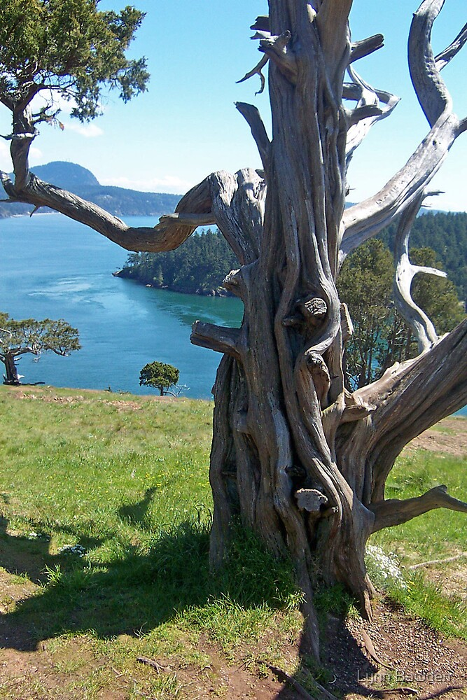 """""""A Gnarled Tree With a View"""" by Lynn Bawden"""