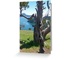 """A Gnarled Tree With a View"" Greeting Card"