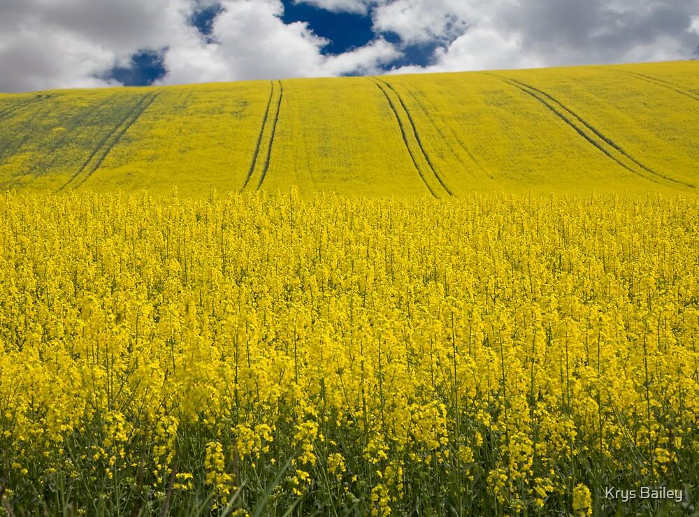 Fields of Gold by Krys Bailey