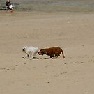 Two Dogs having a Fun Day at the Beach by Glitter