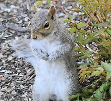 I confess I ate the bird food by larie200