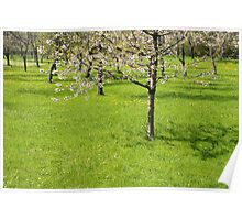 Spring Orchard Poster