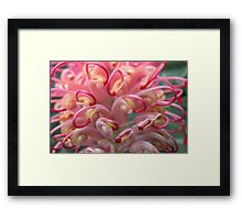 Pink ... with a touch of Yellow Framed Print
