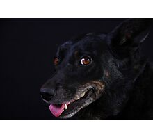 Jazzy Pooch Photographic Print