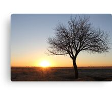 Winter Sunrise... Free State, South Africa Canvas Print