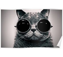 Cat with Glasses Poster ! Poster
