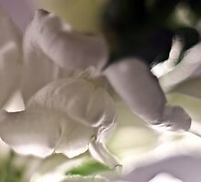 Snapdragon by BarbHoffman