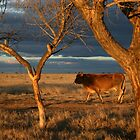 Head'n for bed... Free State, South Africa. by Qnita