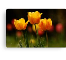 Signs of Spring Canvas Print