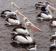 Line of pelicans by georgieboy98