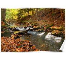 Stream In Fall Poster