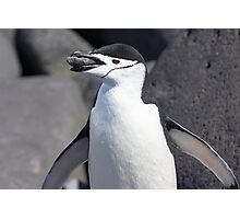 "Chinstrap Penguin ~ ""The Geologist"" Photographic Print"