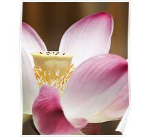 Lotus flower #7 Poster