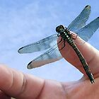 Dragon Fly In Jonys Hand by HippyDi