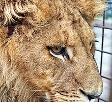 Aslan by Mary Broome
