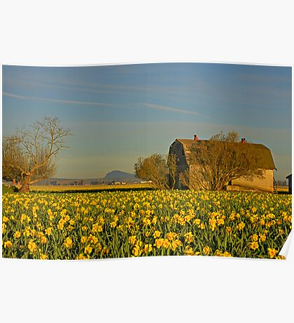 A Morning in the Daffodils Poster