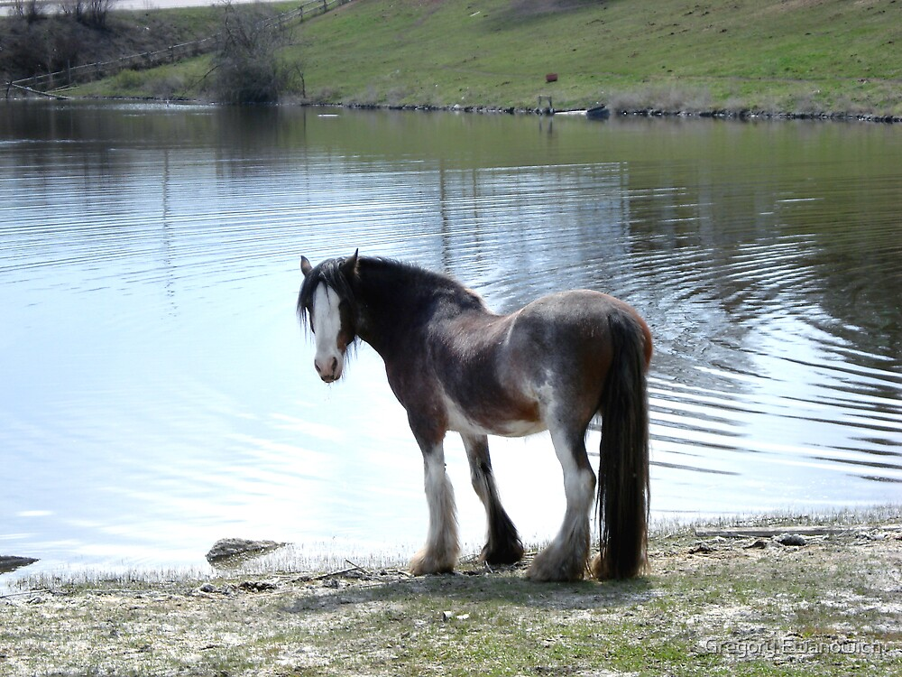 You Can Lead A Horse To Water...... by Gregory Ewanowich