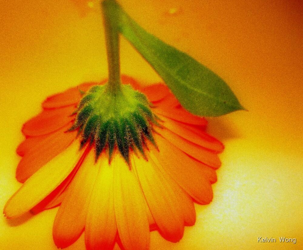 Orange Delight by Kelvin  Wong
