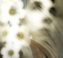 Between two gardens by Daniela M. Casalla